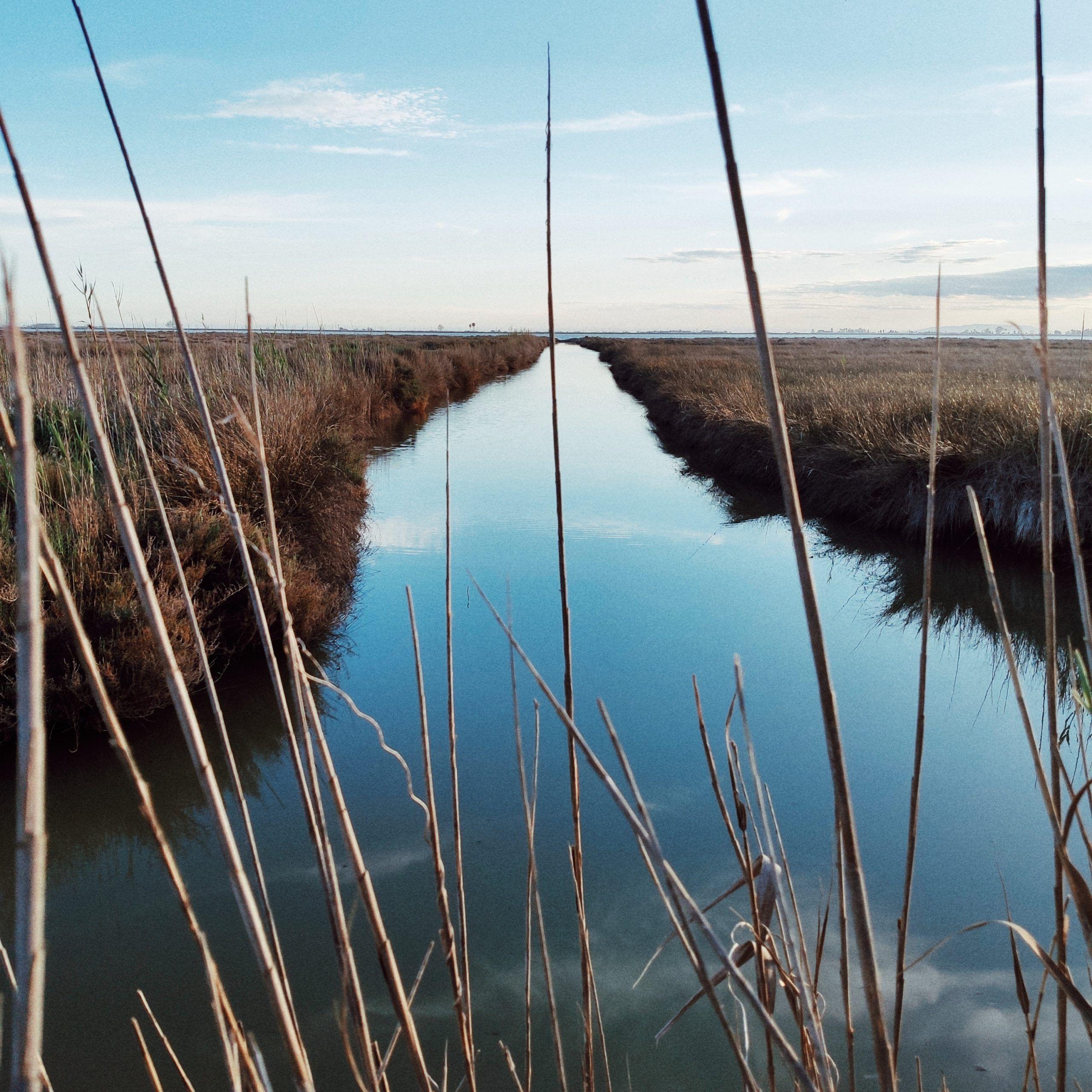Canal de agua en el Delta del Ebro
